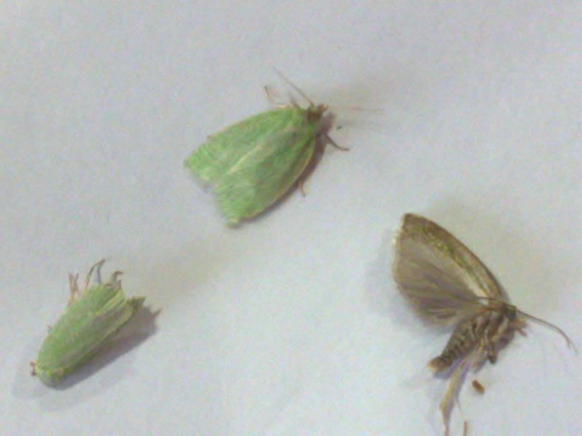 Entomologo Risponde